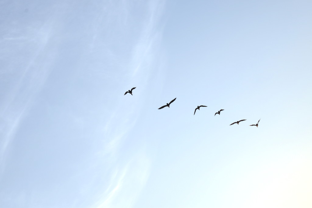 Birds at various stages of flight
